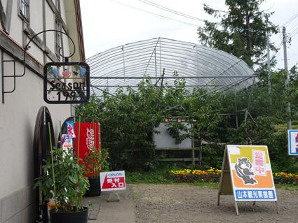 【フルーツ狩り】季節の果物が食べ放題!!余市の山本観光果樹園でさくらんぼとブルーベリーとプラムを食べてきたよ。
