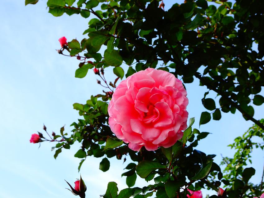 バラ園とお花コレクション。